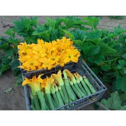 Zucchine Romanesche conf. 1kg